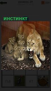 1100 слов львица защищает своих детенышей, инстинкт 39 уровень