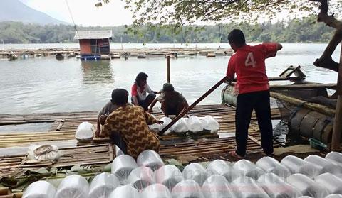 Bantuan benih ikan dan pakan untuk budidaya di Ranu Klakah