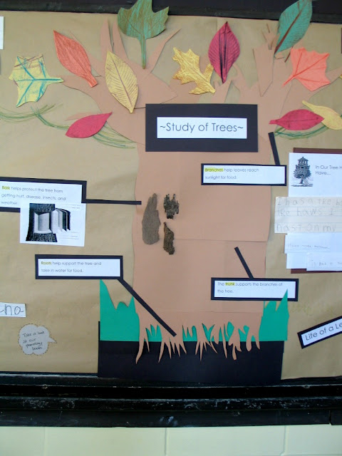 Tree Inquiry First Grade