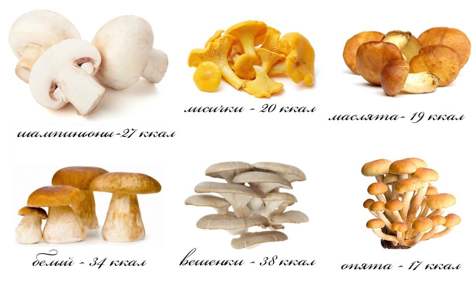 Калорийность белого сушеного гриба