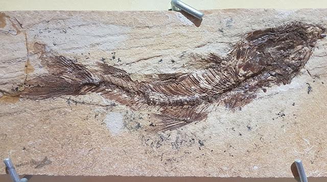 Santana do Cariri, Ceará, Museu Paleontologia URCA