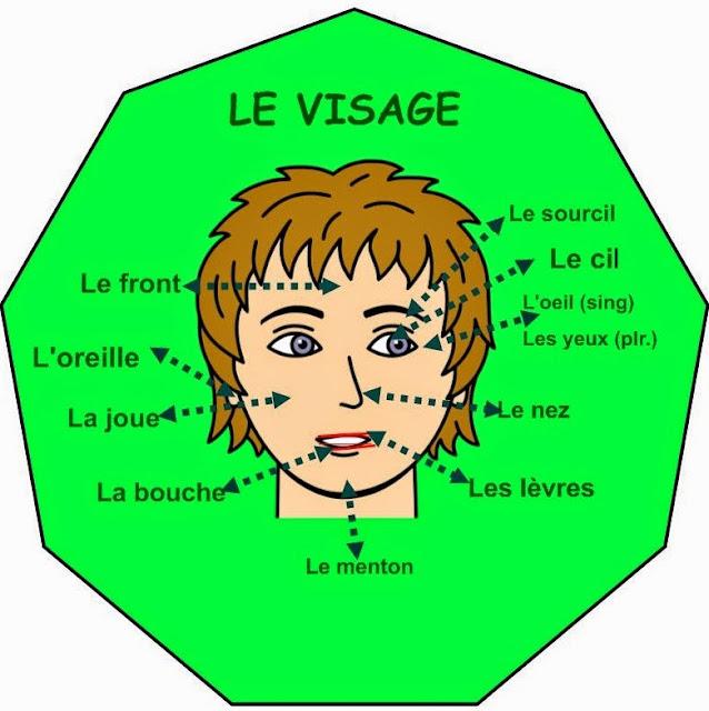 Części ciała - słownictwo 6 - Francuski przy kawie