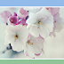 Multi Hover Effect On Blogger Images Using Pure CSS