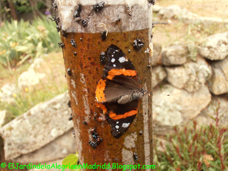 El jardín de la alegría : Cola adhesiva como barrera contra las ...
