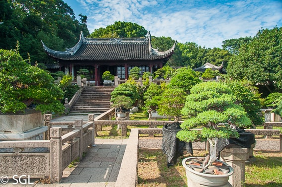 Suzhou, bonsais en la colina del tigre. China
