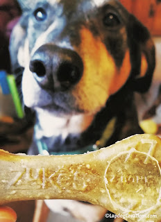 Teutul can't wait for his Zuke's Z-Bone dental chew!  #ChewyInfluencer #NationalPetOralHealthCareMonth #DentalTreats ©LapdogCreations