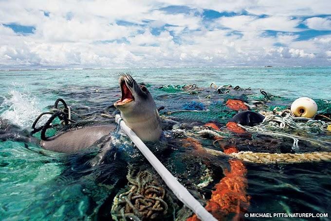 Plásticos nos Oceanos   Petição WWF