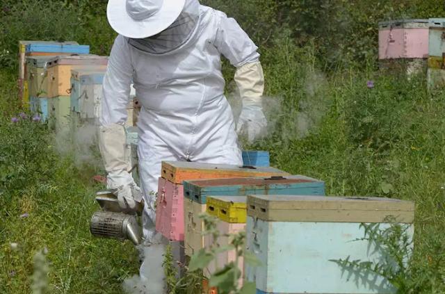 30 χρόνια επαγγελματίας μελισσοκόμος μιλά για την μελισσοκομία το πάθος του & τα προβλήματα