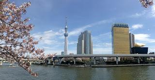 Skytree sakura