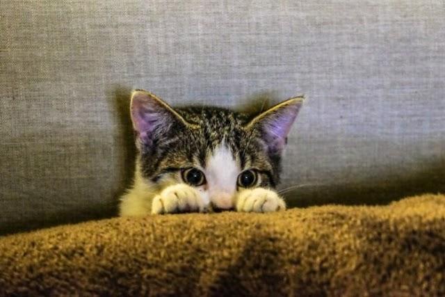 Πώς οι γάτες προστατεύουν τα παιδιά από το άσθμα