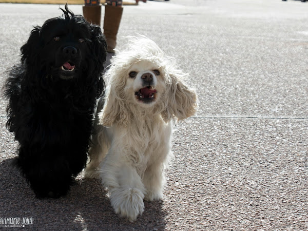 How to Keep Your Dogs Healthy and Active - #NaturesRecipe