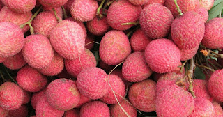 Bihar's Shahi Litchi Gets Geographical Indication Tag