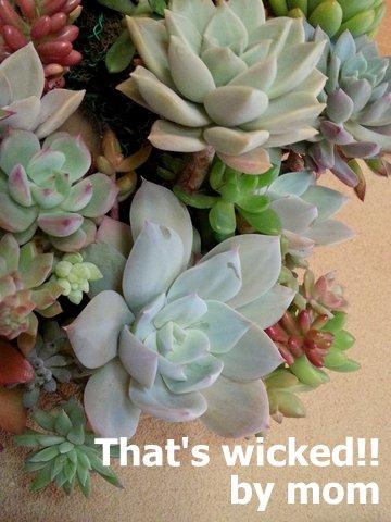多肉植物のリース 白鳳