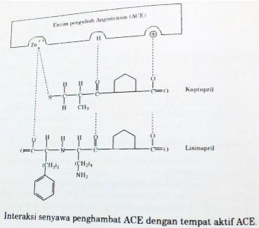 Interaksi senyawa penghambat ACE, seperti kaptopril dan lisinopril