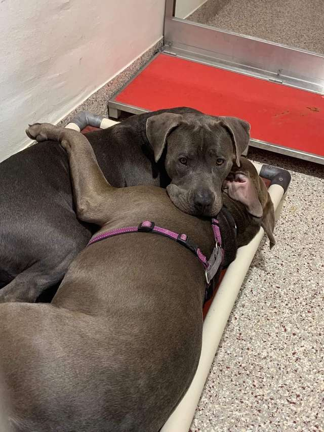 Shelter Dogs Comfort One Another While They Wait To Be Adopted