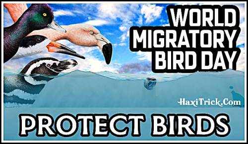 World Migratory Birds Day 12 October 2019 Theme in Hindi