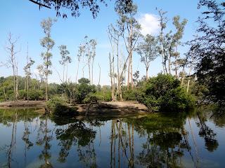 Parque Ecológico do Tietê - Ilha dos Macacos