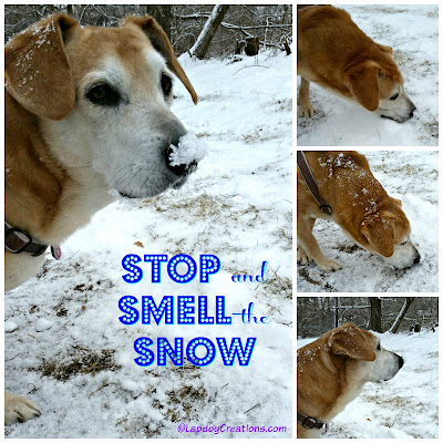 rescued senior hound dog playing in snow