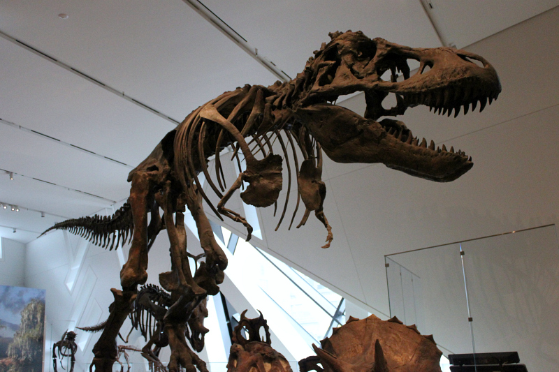 T-Rex at the Royal Ontario Museum