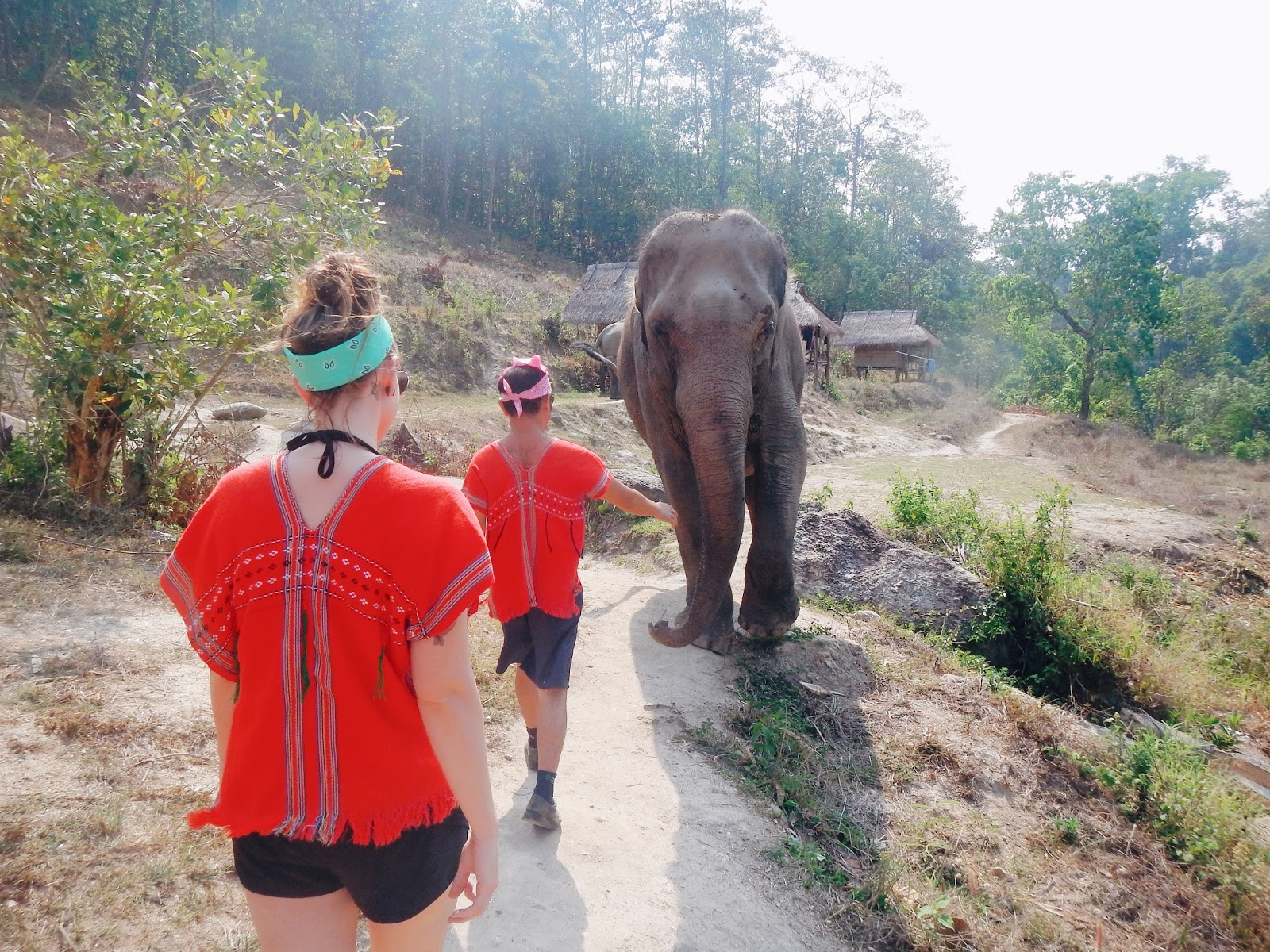 Into the Wild elephant sanctuary Chiang Mai