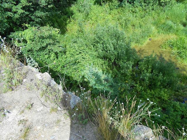 Вид с плотины на Дехановом пруду