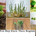 8 Vegetables You Buy Once And Regrow Forever! How To Grow Them Full