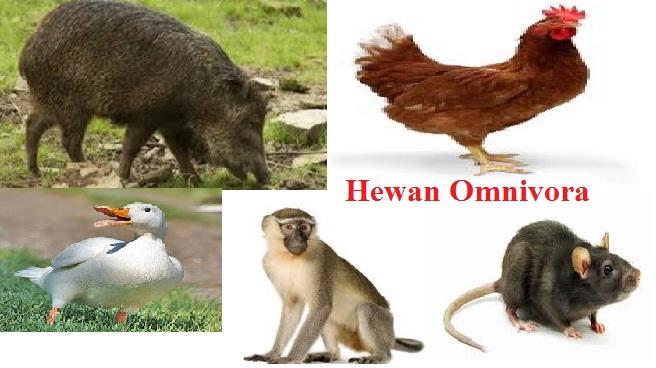 410 Gambar Hewan Omnivora Dan Penjelasannya HD