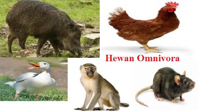 Contoh Hewan Omnivora Lengkap dengan Penjelasannya