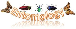 Entomology entomologi ilmu serangga laba-laba Entomologi Entomologi Entomologi Entomologi Entomologi Entomologi Entomologi Entomologi Entomologi Entomologi Entomologi Entomologi Entomologi Entomologi Entomologi Entomologi Entomologi Entomologi Entomologi Entomologi Entomologi Entomologi Entomologi Entomologi Entomologi Entomologi Entomologi Entomologi Entomologi Entomologi Entomologi Entomologi Entomologi Entomologi Entomologi Entomologi Entomologi Entomologi Entomologi Entomologi Entomologi Entomologi Entomologi Entomologi Entomologi Entomologi Entomologi Entomologi Entomologi Entomologi Entomologi Entomologi Entomologi Entomologi Entomologi Entomologi Entomologi Entomologi Entomologi Entomologi Entomologi Entomologi Entomologi Entomologi Entomologi Entomologi Entomologi Entomologi Entomologi Entomologi Entomologi Entomologi Entomologi Entomologi Entomologi Entomologi Entomologi Entomologi Entomologi Entomologi Entomologi Entomologi Entomologi Entomologi Entomologi Entomologi Entomologi Entomologi Entomologi Entomologi Entomologi Entomologi Entomologi Entomologi Entomologi Entomologi Entomologi Entomologi Entomologi Entomologi Entomologi Entomologi Entomologi Entomologi Entomologi Entomologi Entomologi Entomologi Entomologi Entomologi Entomologi Entomologi Entomologi Entomologi Entomologi Entomologi Entomologi Entomologi Entomologi Entomologi Entomologi Entomologi Entomologi Entomologi Entomologi Entomologi Entomologi Entomologi Entomologi Entomologi