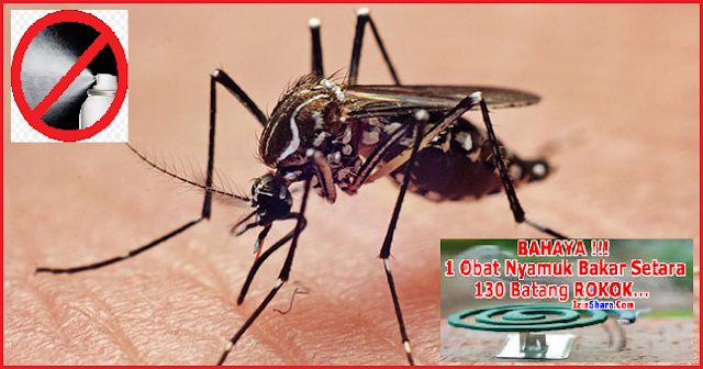Cara Ampuh Mengusir Nyamuk 100% Work