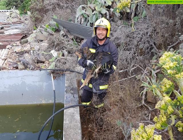 Los Bomberos rescatan un perro de un estanque en Los Llanos de Aridane