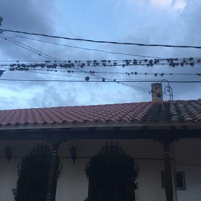 Bromelias en los cables. Samaipata.Bolivia.