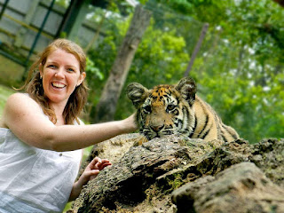 Tiger Kingdom chiang mai vs Tiger Temple: Teen tiger on log