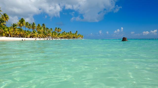 Plage de Sainte Anne en Guadeloupe avec cocotiers