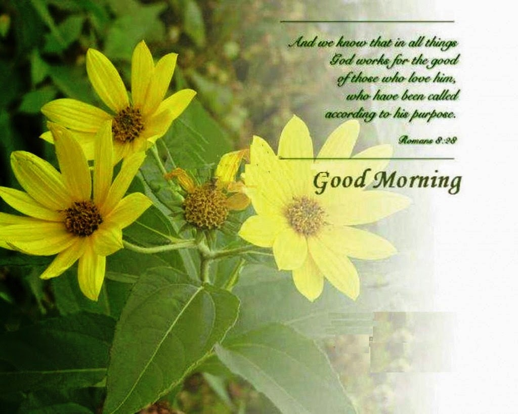 Good Morning Pictures Messages Beautiful Messages