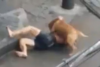 , Shocking Video of Helpless half-naked man attacked by a dog, Latest Nigeria News, Daily Devotionals & Celebrity Gossips - Chidispalace