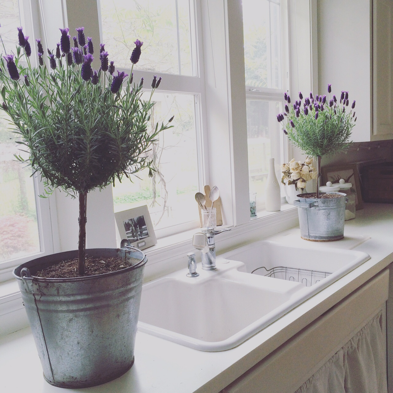I love the way flowers and plants