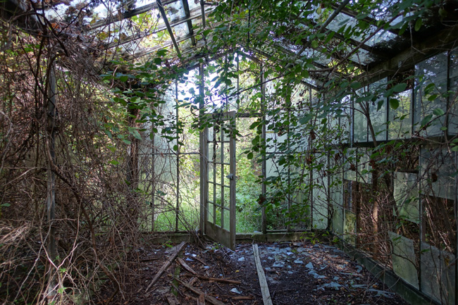 Nature reclaims abandoned Otto's Greenhouse in Huron, Ohio