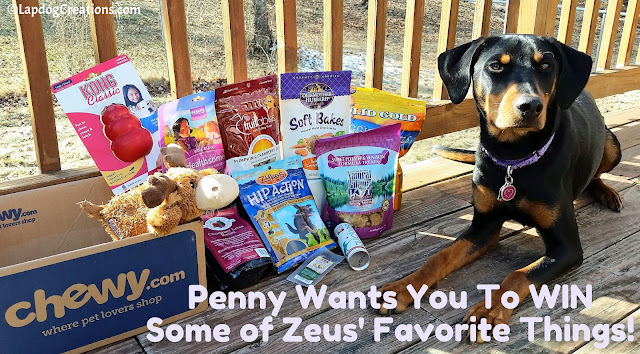 Penny Never Met Her Big Angel Brother Zeus, but She Knows He was Amazing - and she wants you to win some of his favorite things! #CelebrateLife #InHonorofZeus #doggiveaway #Chewy #LapdogCreations #dogbirthday ©LapdogCreations