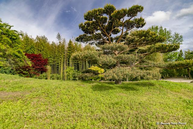 Árboles del Valle del Dragón, la Bambouseraie en Cévennes, Francia por El Guisante Verde Project