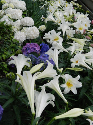 Blue and white Florist hydrangeas and Easter Lilies at the Centennial Park Conservatory Easter Flower Show by garden muses-not another Toronto gardening blog