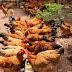 Tăng gấp đôi doanh thu nhờ kỹ thuật chăn nuôi gà ta đúng chuẩn