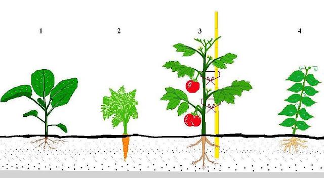 (1.Hortaliças Folhosas; 2. Hortaliças Subterrâneas; 3. Hortaliças de Fruto; 4. Leguminosas)