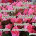 🌸13 Οκτωβρίου 2017 🌸25 Δεκεμβρίου🌸30 Ιανουαρίου🌷🌷🌷Χρόνια Πολλά  Χρυσή, Χρύσα, Χρυσαλία, Χρυσαυγή, Χρυσούλα, Σήλια, Χρυστάλλα, Χρυσταλλία ,,,,,giortazo.gr