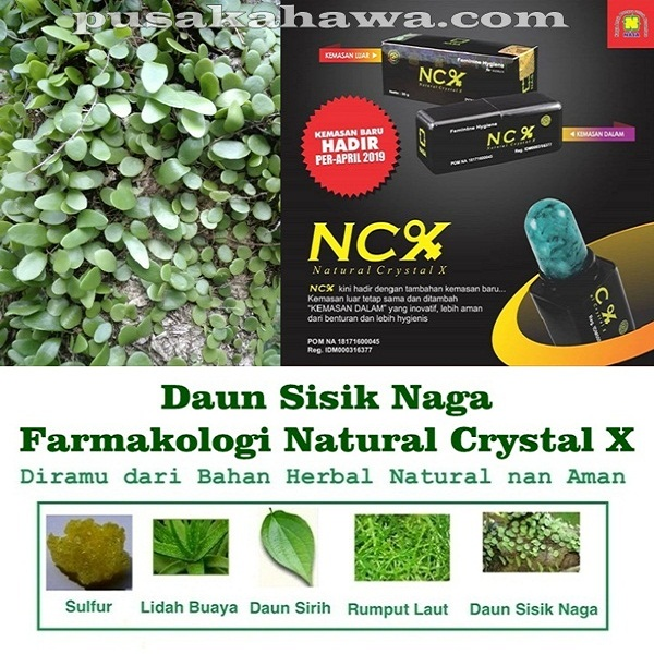 Daun Sisik Naga - Farmakologi Crystal X