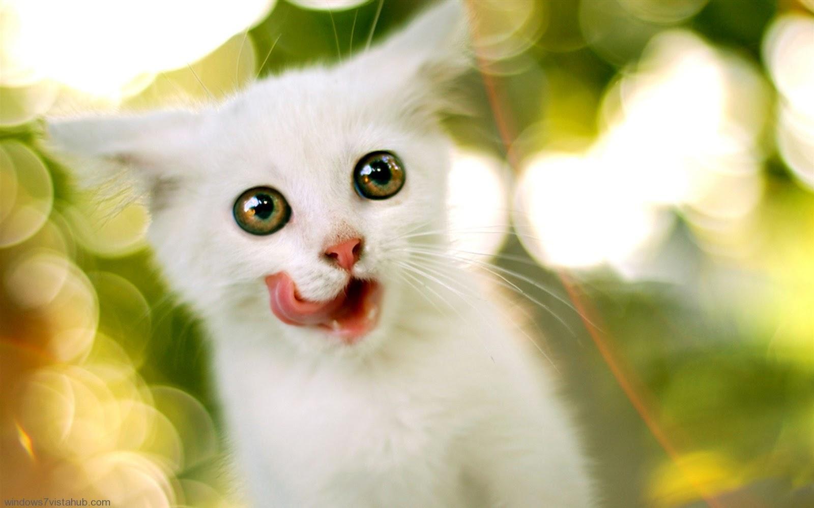 cute eye hd wallpaper | desktop wallpaper | - all new wallpaper