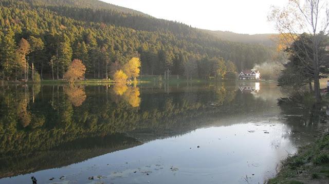 reflections, yansıma, doğa, park, sonbahar