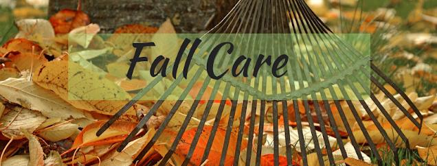 Fall Care for Hostas