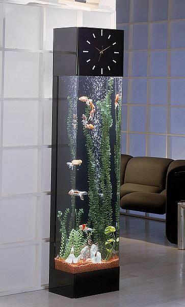 صور حوض سمك زينة