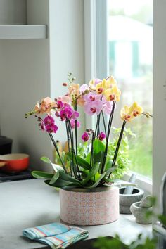 Phalaenopsis Orchid ! Home Decor